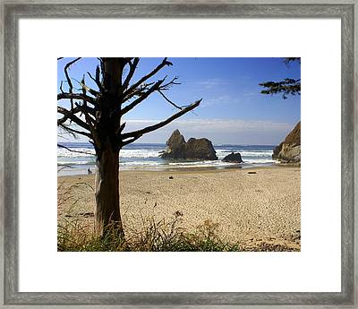 Tree And Ocean Framed Print by Marty Koch