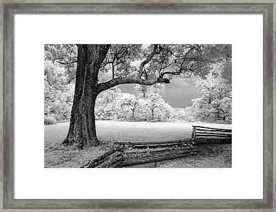Tree And Split Rail Fence Framed Print