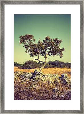 Tree And Rocks Framed Print
