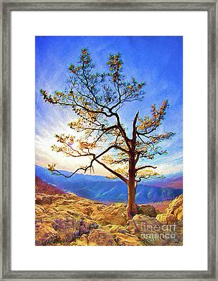 Framed Print featuring the painting Tree And Rocks In The Blue Ridge Near Sunset Ap by Dan Carmichael