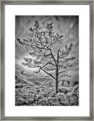 Framed Print featuring the photograph Tree And Rocks In The Blue Ridge Near Sunset Bw by Dan Carmichael