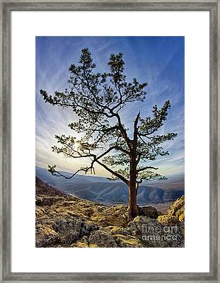 Framed Print featuring the photograph Tree And Rocks In The Blue Ridge Near Sunset by Dan Carmichael