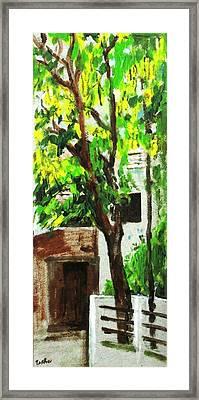 Tree And Shade Framed Print by Usha Shantharam
