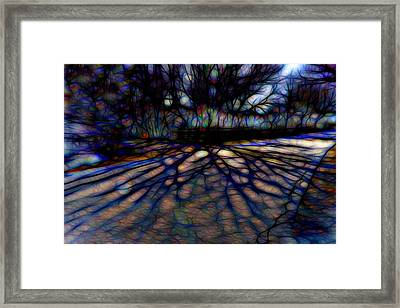 Tree And Shadow Framed Print by Lilia D