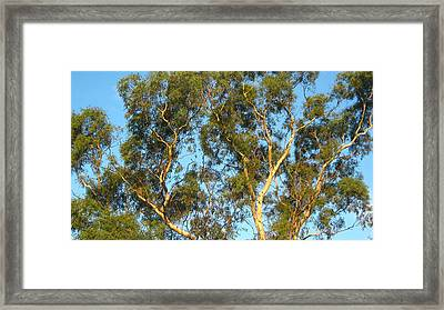 Tree And Sky Framed Print