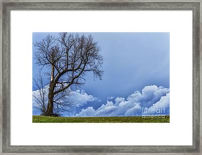 Tree And Stormy Sky Framed Print by Thomas R Fletcher
