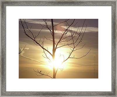 Tree And Sun Framed Print by Richard Mitchell