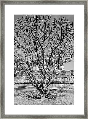 Tree And Temple Framed Print