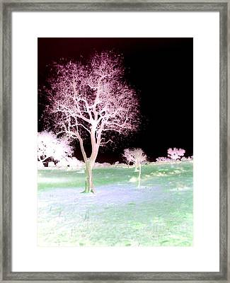 Tree Art  Framed Print by Rs