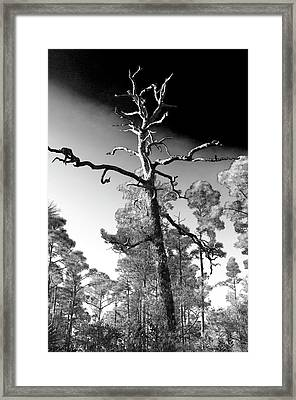 Framed Print featuring the photograph Tree At Halpatiokee by Don Youngclaus