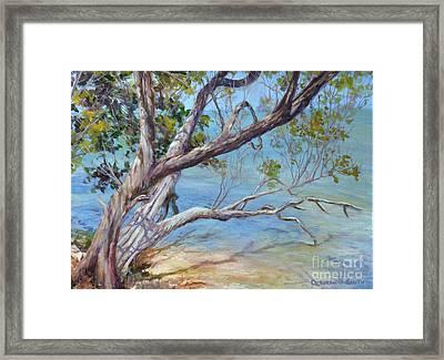 Tree At Islamorada Key Framed Print