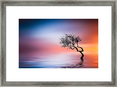 Tree At Lake Framed Print