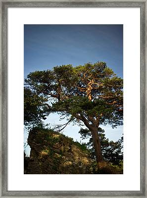 Tree At Maccarthy Mor Castle Framed Print by Douglas Barnett
