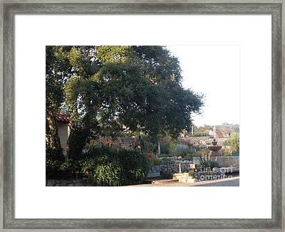 Tree At Mission Carmel Framed Print
