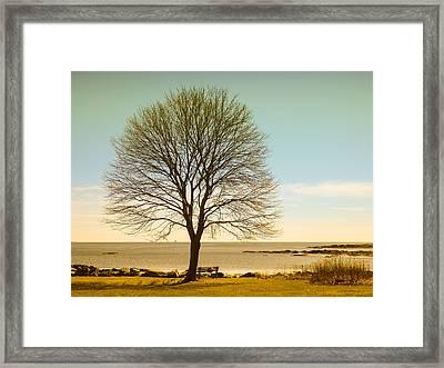 Tree At New Castle Common Framed Print by Nancy De Flon