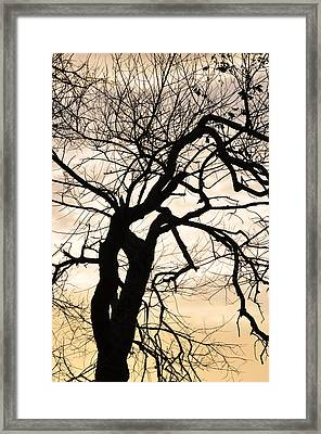 Tree At Sunrise Framed Print by Rose  Hill
