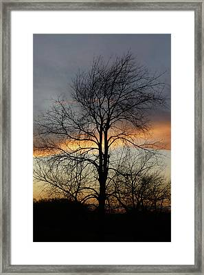 Tree At Sunset Framed Print by Jerry Weinstein