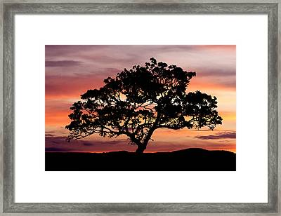 Tree At Sunset Framed Print by Paul Huchton