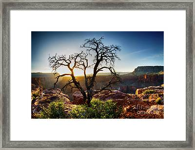 Tree At Toroweap Grand Canyon Framed Print by Bob Christopher