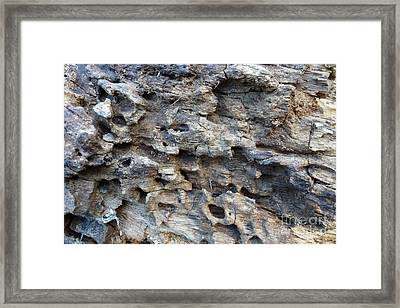 Framed Print featuring the photograph Tree Bark 1 by Jean Bernard Roussilhe
