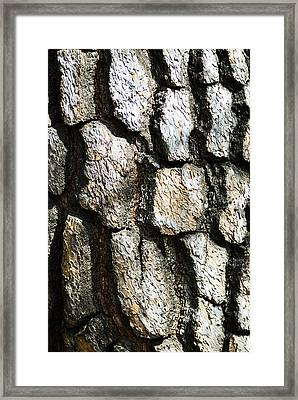 Tree Bark Framed Print by Bill Brennan - Printscapes