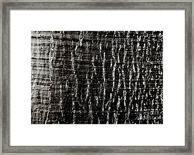 Tree Bark Framed Print by Charmian Vistaunet