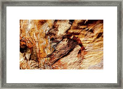 Tree Bark Series  - Patterns #2 Framed Print by Lexa Harpell