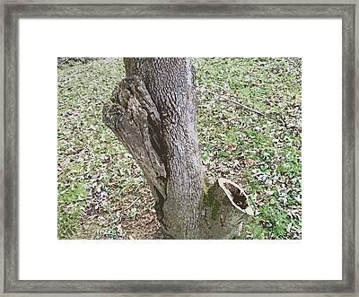 Tree Bark Framed Print by Skyler Tipton