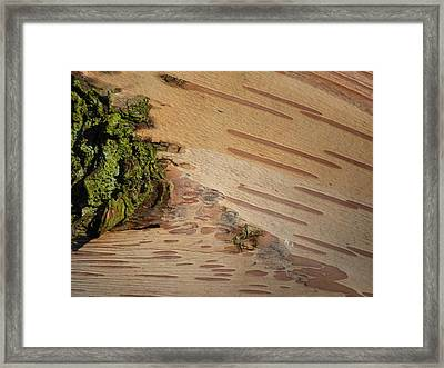 Tree Bark With Lichen Framed Print