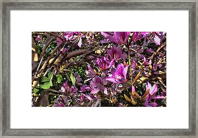 Tree Beauty 4 Framed Print