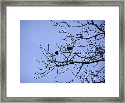 Tree Birds And Sky Framed Print by Richard Mitchell