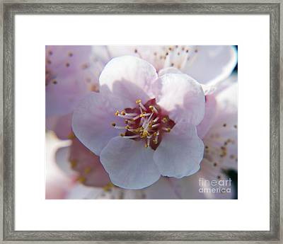 Framed Print featuring the photograph Tree Blossoms by Elvira Ladocki
