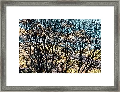 Framed Print featuring the photograph Tree Branches And Colorful Clouds by James BO Insogna
