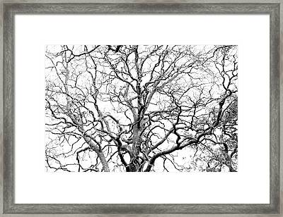 Tree Branches Framed Print by Gaspar Avila