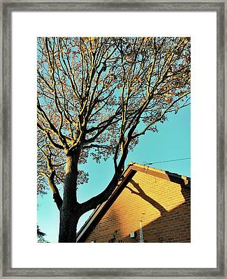 Tree Branches Pattern Framed Print