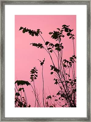 Tree Branches Under Pink Sky Framed Print by Ellie Teramoto