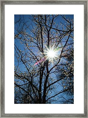 Tree Buds Framed Print