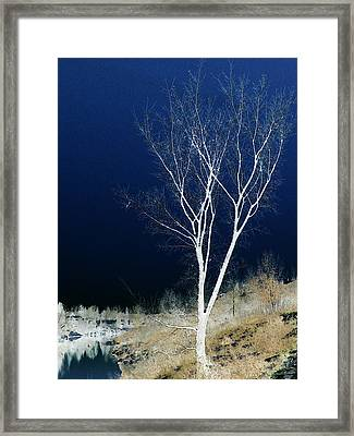 Framed Print featuring the photograph Tree By Stream by Stuart Turnbull