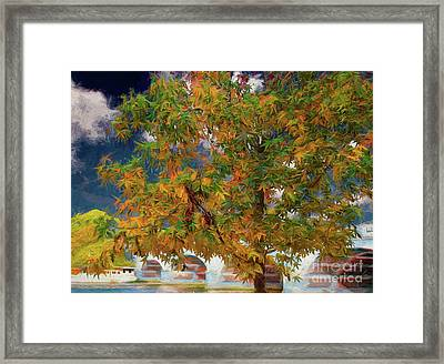 Tree By The Bridge Framed Print