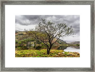 Tree By The Lake Framed Print by Adrian Evans