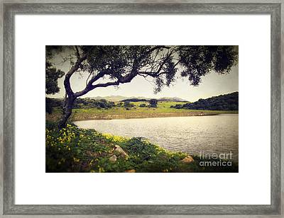 Tree By The Lake Framed Print by Carlos Caetano
