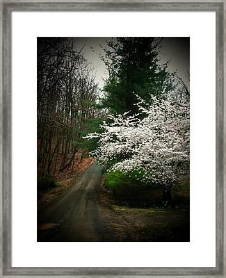 Tree By The Road Framed Print by Joyce Kimble Smith