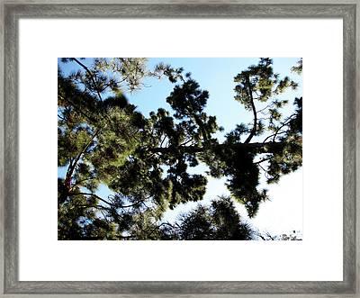 Tree Canopy Framed Print by Karen Sydney