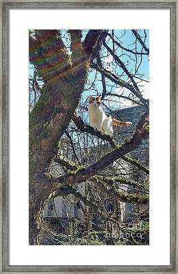 Framed Print featuring the photograph Tree Climber by Bill Thomson