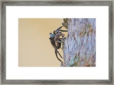 Tree Climbing Crab Framed Print