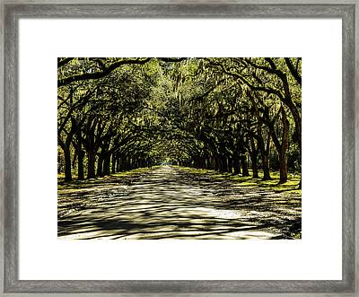 Tree Covered Approach Framed Print