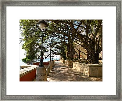 Tree Covered Walkway San Juan Framed Print