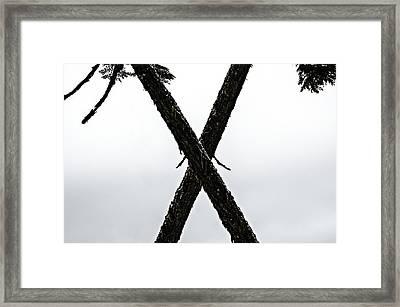 Tree Crossing X Framed Print