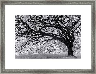 Tree Curl Framed Print by Sean Davey