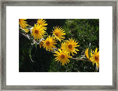 Tree Daisies Framed Print by William Thomas